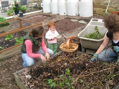 Digging up potatoes in our Square Food Garden.  Rain barrels in the background.  10-11