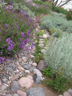 """Dry River Bed"" Going through garden, one of my favorites."