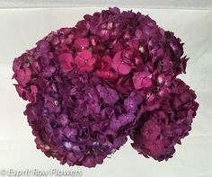 Hydrangea purple Lavender Flowers, Cut Flowers, Hydrangea, Wedding Flowers, Photo Galleries, Seasons, Flower Ideas, Purple, Gallery