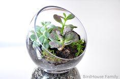 DIY succulent terrarium for Christmas gifts?