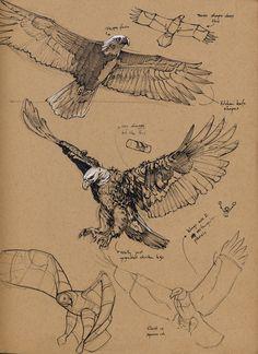 Sketchbook: Rubi's Happy Garbage version 2.0 Eagle Sketch, Bird Sketch, Tiger Sketch, Drawing Techniques, Bird Drawings, Animal Drawings, Pencil Drawings, Animal Sketches, Drawing Sketches