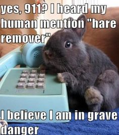 Top 20 Funny Bunny Pictures - The Funy. Funny Animal Memes, Animal Quotes, Cute Funny Animals, Funny Animal Pictures, Cute Baby Animals, Funny Cute, Animals And Pets, Cute Pictures, Hilarious