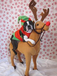 """I don't want to leave the North Pole""!, Wendell, the French Bulldog is Santa's Little Elf. Christmas Animals, Christmas Dog, Christmas Photos, Merry Christmas, I Love Dogs, Puppy Love, Cute Puppies, Cute Dogs, Boston Terrier Love"