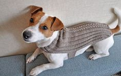 Image result for Dog Sweaters for Winter
