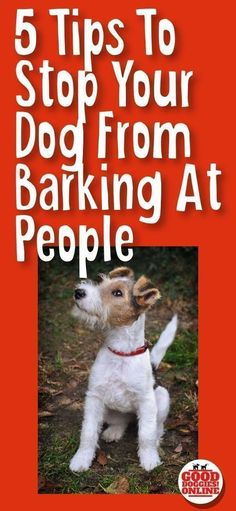 Pet Training - If your dog barks at everyone, check out these 5 easy dog training tips on how to get your dog to stop barking at people. #dogs #dogtraining #barking via Kaufmann's Puppy Training This article help us to teach our dogs to bite just exactly