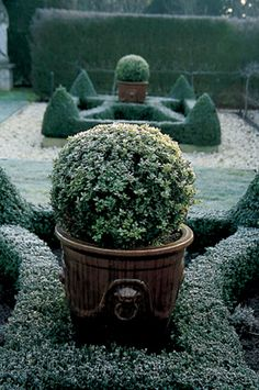 Modern Country Style: How To Use Topiary In A Modern Country Garden - Winter Garten Ideas Garden Frame, Garden Urns, Herb Garden, Boxwood Garden, Glass Garden, Modern Garden Design, Contemporary Garden, Landscape Design, Formal Gardens