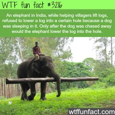 Example how animals have more feelings than humans -WTF fun facts