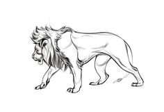 Images For > Lion Profile Drawing