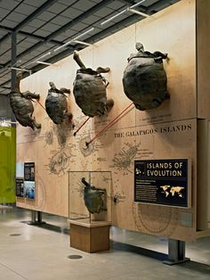 California Academy of Sciences Exhibits I Integration of taxidermied specimens and map for region identification in the exhibition design