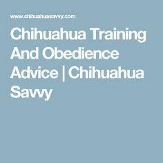Chihuahua Training And Obedience Advice | Chihuahua Savvy