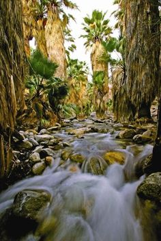 California: Andreas Canyon, Palm Springs hiking trail through an oasis in the desert.