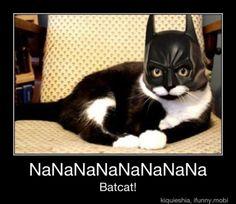He is Batcat