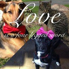 Love is a 4 legged word.