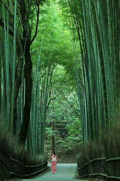 Bamboo path in Sagano, Kyoto, Japan No wonder high things always contain some spiritual idea for humans Kyushu, Kyoto Japan, Japan Japan, Japan Trip, Japan Sakura, Okinawa, Places To Travel, Places To See, Places Around The World