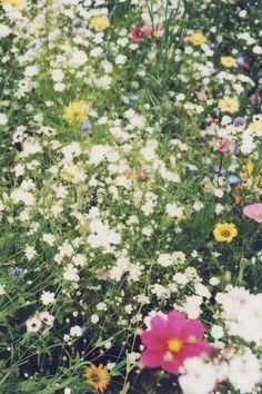 // wildflowers