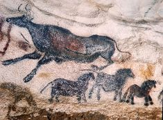 "Axial Gallery, The aurochs jumped over the horse – also known as the ""Falling Cow"", Photo: Ralph Morse/Time Life http://rolfgross.dreamhosters.com/CavePainting/Lascaux/Lascaux.html"