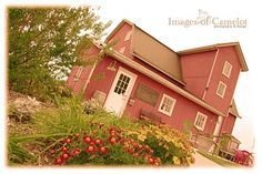 Michigan winery tour - Stay in a house at Hickory Creek vineyard.  Go tasting at Lemon Creek, Domain Berrien, Round Barn, Karma Vista, St. Julian, & Contessa.  Taste wine and have dinner at Tabor Hill.  Leave your mark with a wine cork on the wall at Free Run Cellars.  This is the Napa of the Midwest!