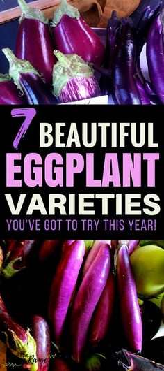 Vegetable Gardening Ideas: Try growing some of these amazing eggplant varieties! Vegetable Gardening Ideas: Grow some of these amazing varieties … Vegetable Garden Planner, Indoor Vegetable Gardening, Vegetable Garden For Beginners, Organic Gardening Tips, Planting Vegetables, Organic Vegetables, Gardening For Beginners, Growing Vegetables, Urban Gardening