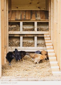 Raising chickens has gained a lot of popularity over the past few years. If you take proper care of your chickens, you will have fresh eggs regularly. You need a chicken coop to raise chickens properly. Use these chicken coop essentials so that you can. Chicken Barn, Chicken Coup, Best Chicken Coop, Backyard Chicken Coops, Building A Chicken Coop, Chicken Runs, Chickens Backyard, Large Chicken Coop Plans, Chicken Ladder