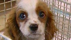 PDSA has warned dog owners in south west Wales to beware of a deadly virus after a rise in deaths.