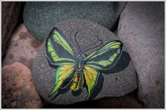 Paradise Birdwing butterfly on Lake Superior stone w/ Display Stand by StonewingsbyOshi on Etsy