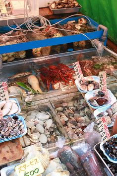 Huge array of seafood on offer @Tsukiji Fish Markets