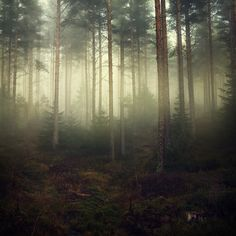 """Reminds me of """"A forest"""" by The Cure. Misty Forest, Foggy Forest, Fantasy Setting, Walk In The Woods, In The Tree, Beautiful World, Simply Beautiful, Beautiful Places, Drawing"""