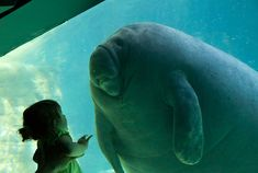 First Contact by CMGW Photography via Colossal I love manatees. I love this photo. Little girl and enormous manatee gaze at each ot. Polo Sul, Sea Cow, Mundo Animal, Big Hugs, First Contact, My Favorite Image, Nature Photos, Funny Kids, Funny Animals