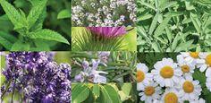 Doctor Natura: Rolul terapiilor complementare in medicina mileniu...