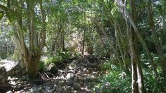The short but lovely Boekenhout Trail at Kirstenbosch, Cape Town. By Exclusive Getaways