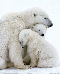 I love polar bears. They are my favorite animals.