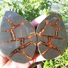 Your place to buy and sell all things handmade Healing Stones, Crystal Healing, Septarian Stone, Gray Rock, Picture Polish, Brown Line, Calcite Crystal, Natural Shapes, Fossils