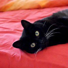 Black Cat~