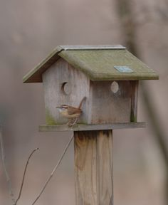 Feeding Mealworms to Birds In some cultures, mealworms are a delicacy for people. Around here, they are a delicacy for birds like chickadees, wrens, and bluebirds. Learn how to raise mealworms so you can have your own inexpensive, never-ending supply.