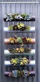 Bildresultat för hanging plants ideas