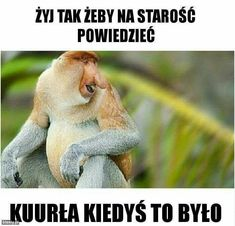 Kurła Best Memes, Harry Potter, Lol, Humor, Funny, Creative Things, Thoughts, Historia, Laughing So Hard