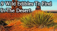 9 Wild Edibles To Find In The Desert: At first glance, the desert looks barren; it's dry, with very few plants and even fewer animals. However, at closer inspection, there are many ways to avoid starvation in a survival situation in the desert if you know what to look for. Finding wild edibles in the desert can be a tricky thing but with the proper knowledge, you won't starve.