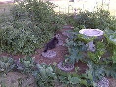Dreaming of my garden...