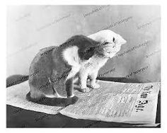 Image result for vintage  cat pet photos