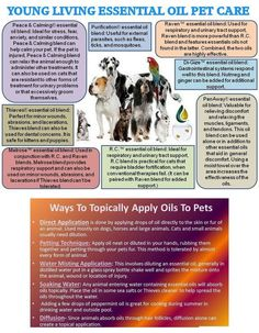 Young Living is the World Leader in Essential Oils. Young Living Essential Oils (YLEO) only incorporates the highest purity in grade for all of our health products. Raven Essential Oil, Essential Oils Dogs, Essential Oil Uses, Doterra Essential Oils, Young Living Essential Oils, Yl Oils, Young Living Pets, Oils For Dogs, Living Essentials