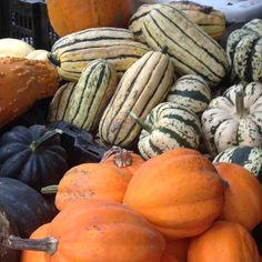 pumpkins variety #nybg