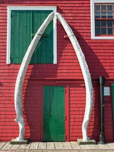 Massive, stunning whale bones at the Fisheries Museum in Lunenburg, Nova Scotia Canada! O Canada, Canada Travel, Lunenburg Nova Scotia, East Coast Canada, Nova Scotia Travel, Places Ive Been, Places To Go, East Coast Road Trip, Atlantic Canada