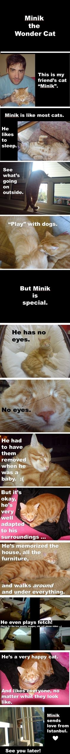 Minik the Wonder Cat // funny pictures - funny photos - funny images - funny pics - funny quotes - #lol #humor #funnypictures