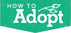 Are you called to Adopt? Here are some questions to ask yourself?