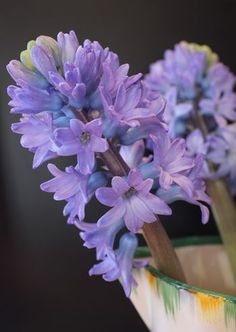 Floral hope, beautiful hyacinths photographed by Jane Brocket Peonies, Tulips, Lilacs, Valentine Day Love, Valentines, Garden Paths, Vintage Flowers, Spring Flowers, Home And Garden