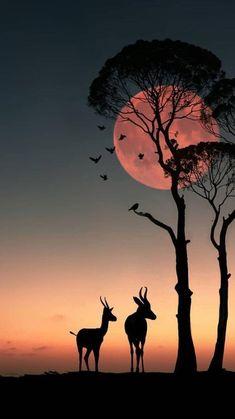 Wallpaper Nature Flowers, Beautiful Nature Wallpaper, Scenery Wallpaper, Beautiful Photos Of Nature, Beautiful Sunset, Moon Photography, Nature Illustration, Landscape Wallpaper, Silhouette Art