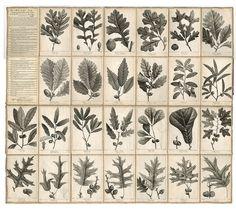 Michaux oaks | Flickr: partage de photos!