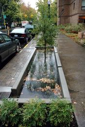 collecting stormwater and putting it back into the ground