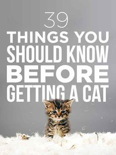 39 Things You Should Know Before Getting A Cat