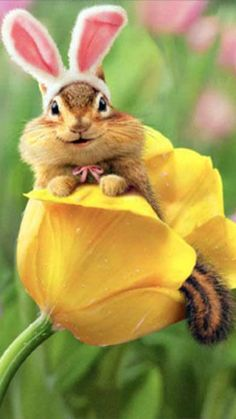 Chipmunk Bunny In Tulip